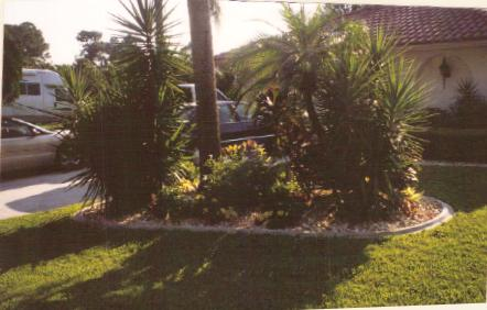 A front garden between 4 car driveway and walkway to front of house; Actual Size=240 pixels wide