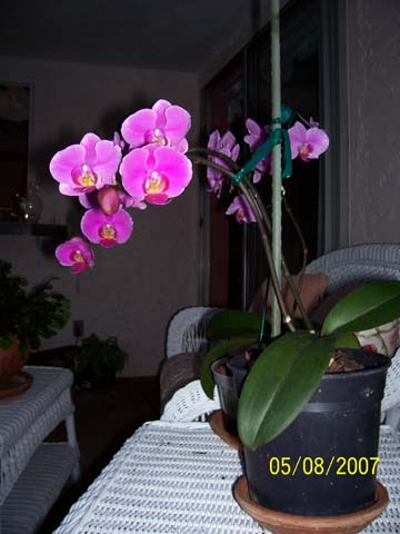 purpleorchids.jpg
